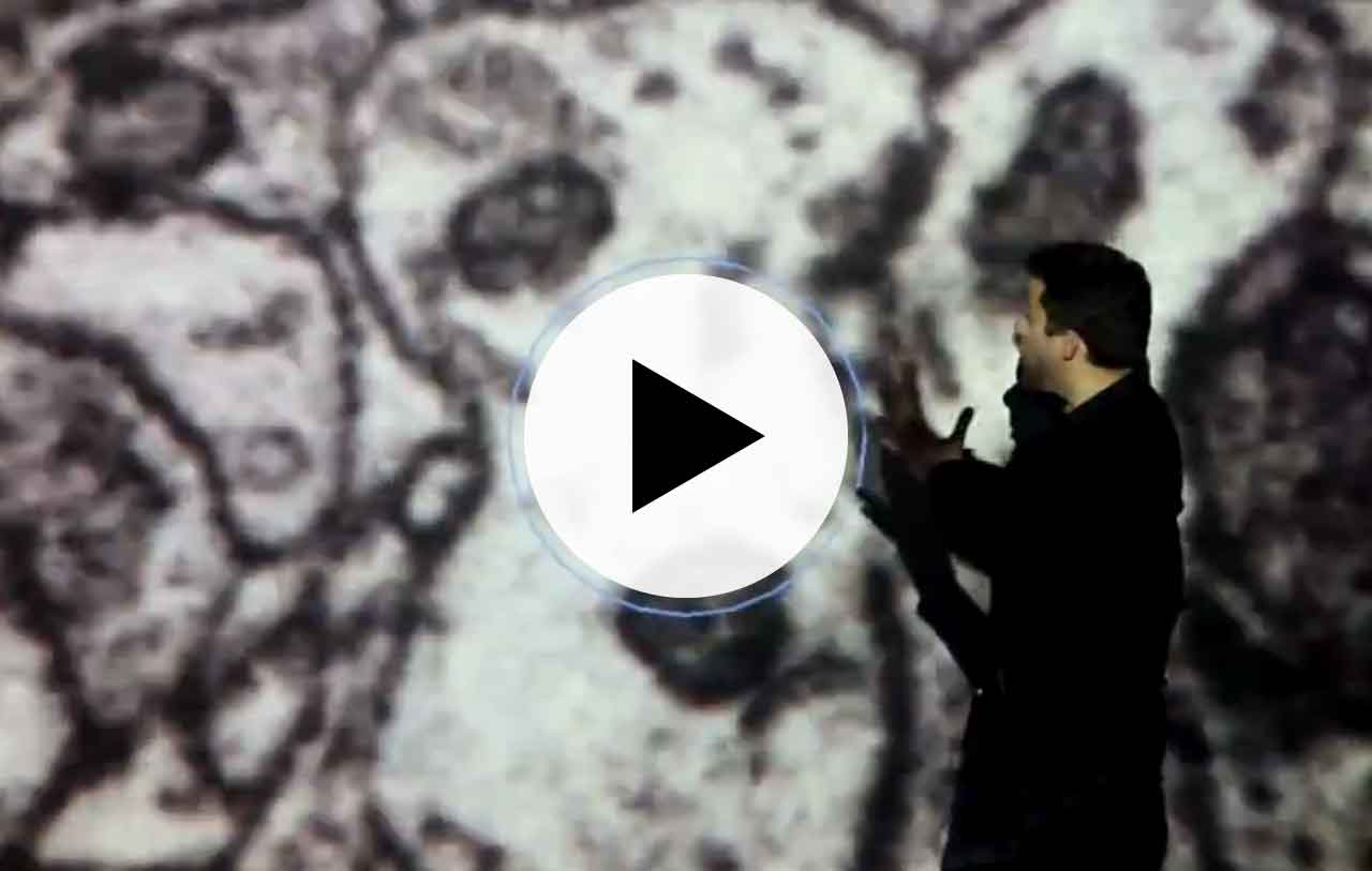 Architecture of the brain (video)